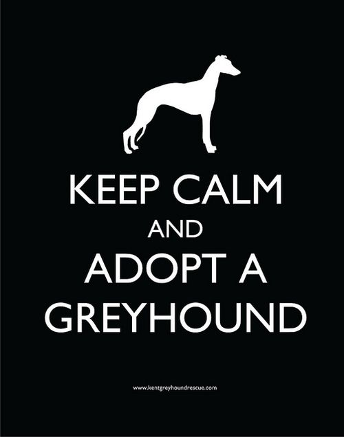 Greyhound. don't buy from breeders when there are AMAZING dogs out there who are euthanized if they don't get adopted.