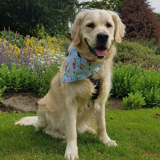 Well Our Handsome Model Harvey Thinks Dog S Rule And His Owner