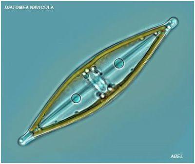 Bios 10: Reino Protista