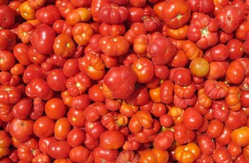 The most famous and popular product of Santorini, cherry tomatoes with the slightly hardest skin and rich juicy body, can be savoured fresh, sun-dried, in the form of paste or even as spoon-sweet.