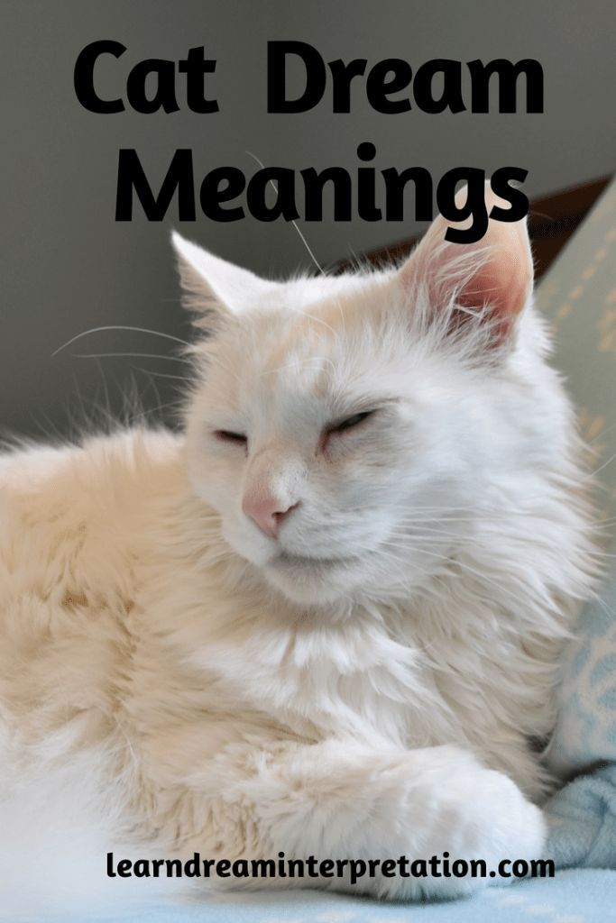 Cat Dream Meanings Dream Meanings Dream Interpretation Dream Symbols