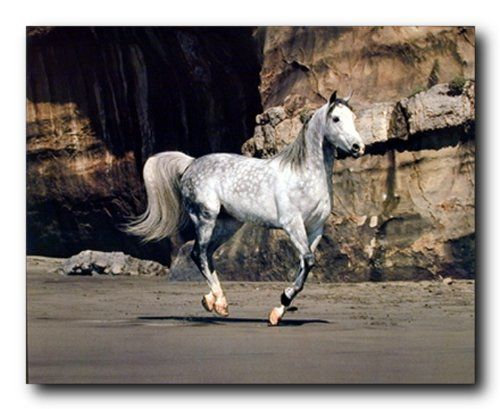 Perfect! This beautiful poster would add a calm and natural atmosphere to your home. Add this beautiful wall poster to your living space which will bring unique character and satisfy your appetite for genuine beauty. This poster captures the image of a white horse running on a beach is sure to catch lot of attention. You'll definitely enjoy viewing this poster into your wall. So what are you waiting for, hurry up and order this poster for its excellent quality with high degree of color…
