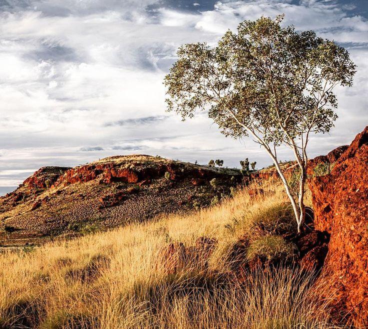 Silence slightest breeze warm afternoon light stunning Pilbara scenery good times :) #gushagoeswalkabout #exploreaustralia #wanderaustralia #canonaustralia #wow_australia #itsamazingoutthere #cruising_Australia #pilbara