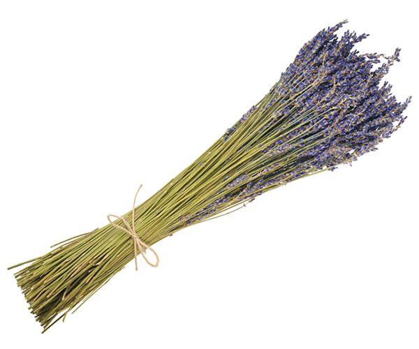 Dried decorative : ΛΕΒΑΝΤΑ ΜΑΤΣΟ DARK BLUE ΔΙΑΚΟΣΜΗΣΗΣ