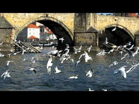 El Moldava-Praga. Música :Smetana . Fotomontaje: Javier Senovilla