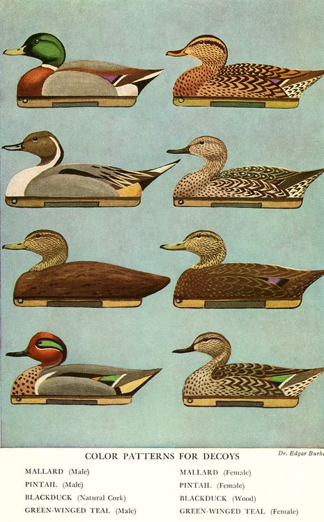 Color Patterns for Decoys.  http://www.annabelchaffer.com/categories/Country-Pursuits/