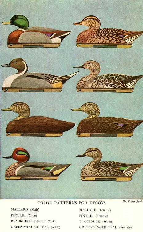 Enten, Wasserwild, Wasservögel, Jagd, St. Hubertus