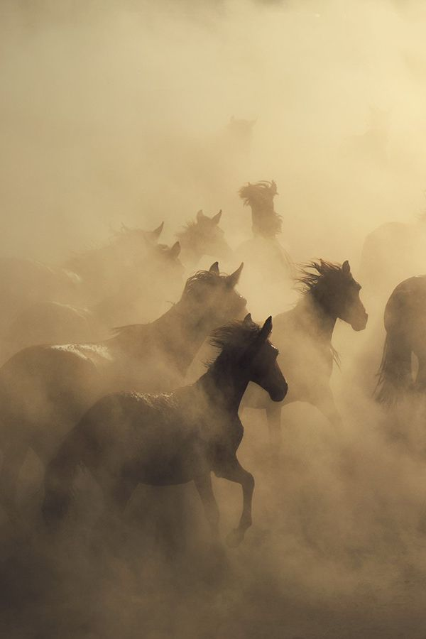 You're spookin' the horses…