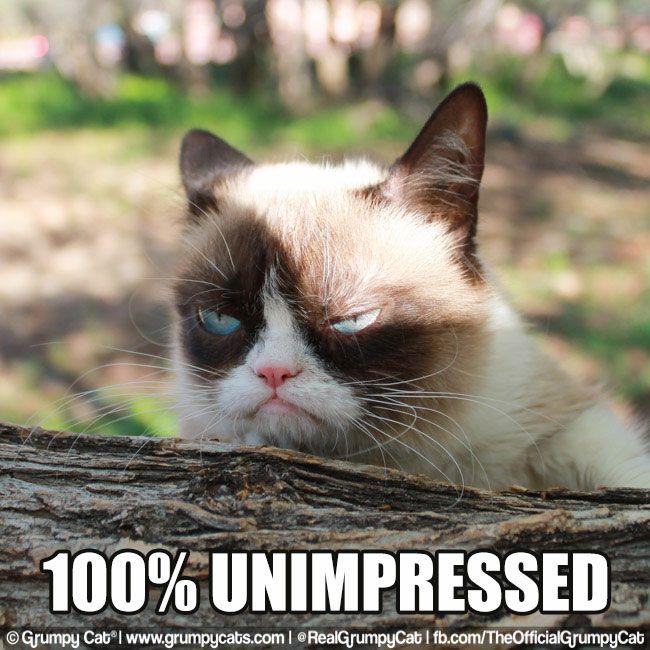 100% Unimpressed | Grumpy Cat | Pinterest