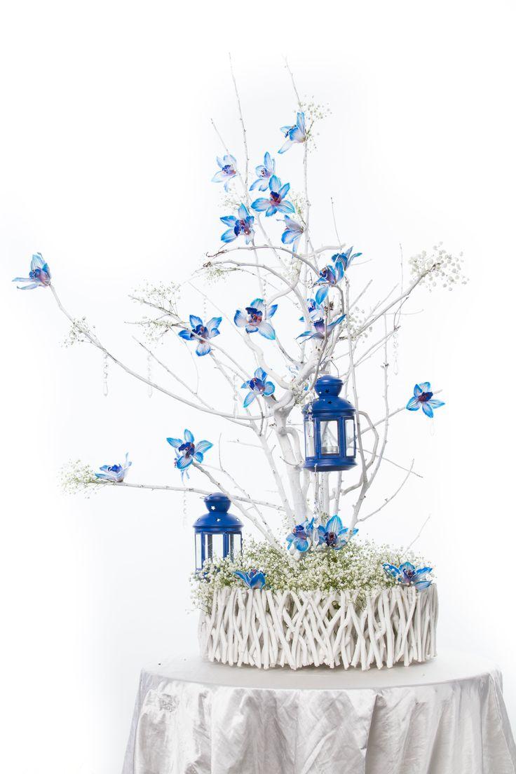 Blue cymbidium orchids