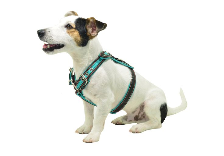 Handmade Leather Dog Harness with Rhinestone finishes for small to medium breeds - CH100035 by HandmadePetCreations on Etsy