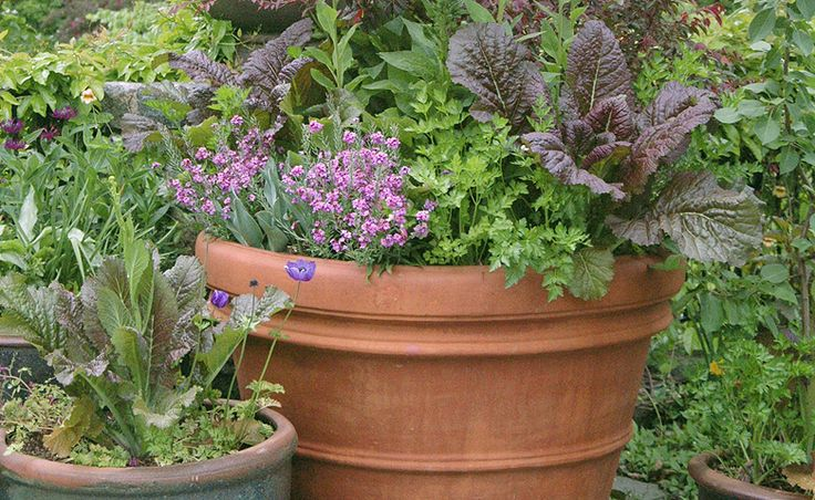 23 best homestead inspiration images on pinterest for Organic container gardening
