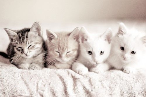 * * A GROUP OF CATS IS CALLED A 'CLOWDER'. A GROUP OF KITTENS IS CALLED A 'KINDLE.'
