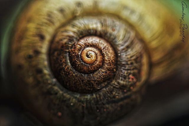 21 Best Images About Fibonacci On Pinterest