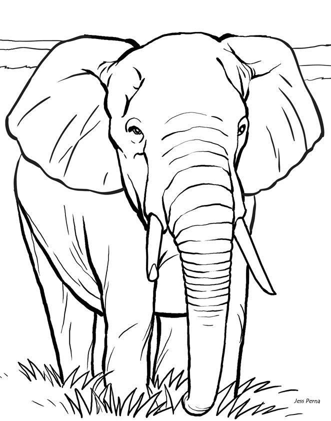 Image Detail For Elephant Coloring Page Illustrator