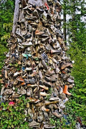 The iconic shoe tree on route to holberg.