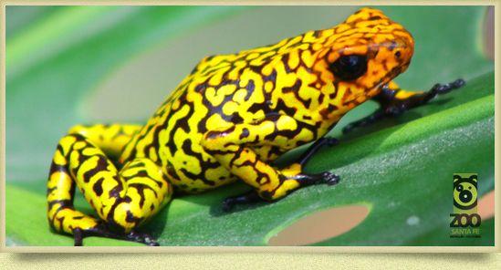 Anfibios - Parque Zoológico Santa Fe