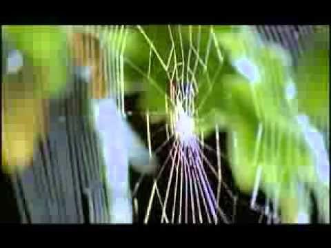 arañas - YouTube
