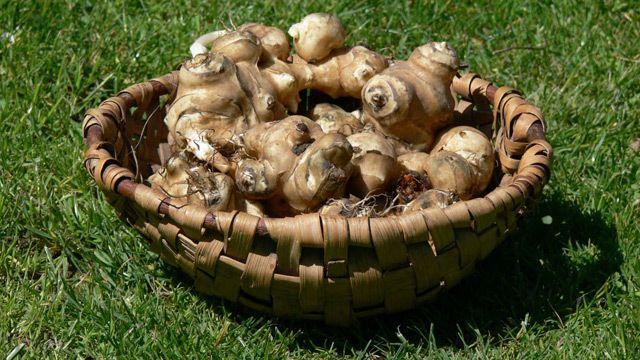 Csicsóka, a diétás krumpli | Receptek | Donna.hu