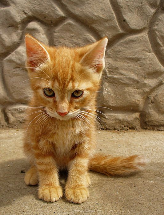 I just an orange tabby kitten, but I knows ' Meow and de world meows wif  yoo; hiss and you hiss alone' Incidentally, I need a home.