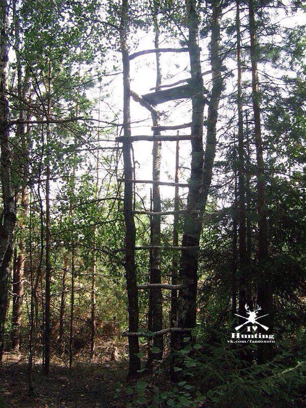 Строительство лабаза  Небольшой опыт охоты на лису на приваде побудил меня поделиться своими мыслями по строительству засидок на этого хитрого и осторожного зверя.  Самый простой вариант это, конечно, найти два растущих рядом дерева и прибив ступеньки к стволам быстренько соорудить лесенку на необходимую высоту. На верху засидки прибивается несколько жердей между деревьями, на них накалачиваюся доски для сиденья. Сидите Вы на таком лабазе как бы «в седле».  Под ноги также приколачиваются…