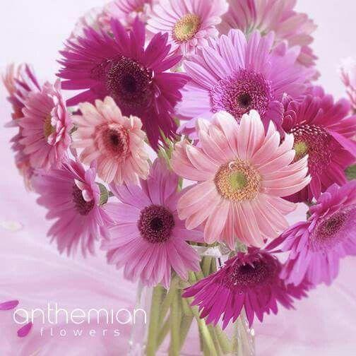 Χρειάζεστε μια ανανέωση στο εργασιακό σας περιβάλλον; Ένα μπουκέτο όμορφα λουλούδια θα σας βοηθήσει πολύ #flowers_in_office  #love_flowers #ανθοπωλείο #αποστολη #λουλουδιων #on_line_flowers #send_flowers #anthemion #flowers