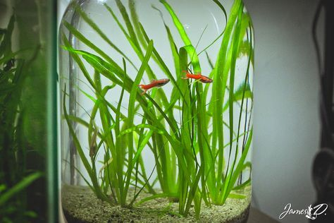 how to make an ecosystem in a jar