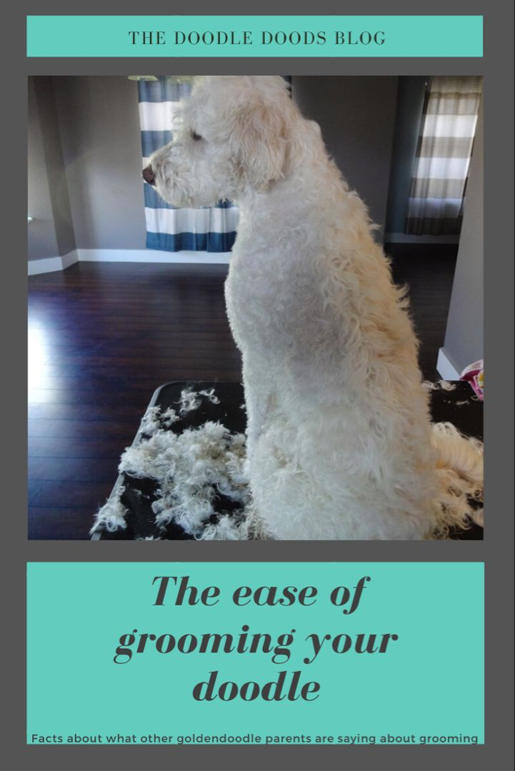 Ease Of Grooming A Goldendoodle In 2020 Goldendoodle Grooming Goldendoodle Goldendoodle Temperament