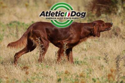 Siamo giunti nella fase più calda della stagione che precede il ritorno dei cani sui terreni di caccia. Un'alimentazione controllata, equilibrata ma leggera e facilmente digeribile è la soluzione ideale, vediamo le proposte della linea Atletic Dog     ...