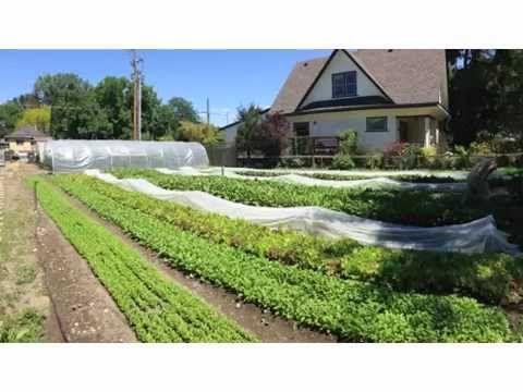 I want to teach you how I earn $75k on 1/3 an acre. Register for my Profitable Urban Farming course at http://profitableurbanfarming.com This is an introduct...