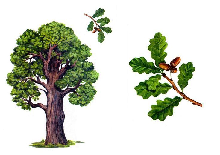 Картинки для детей деревья летом