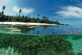 Image result for seychelles country