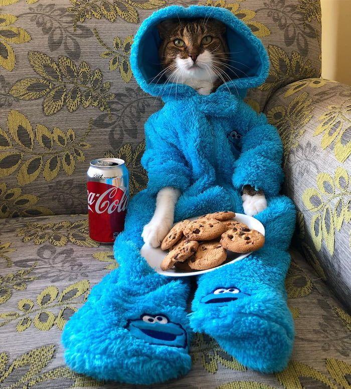 20 niedliche und lustige Tierfotos für Ihren Dienstag