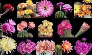 Não perca este buquê de flores que exibem uma infinidade de cores exuberantes  - é um colírio para os olhos!