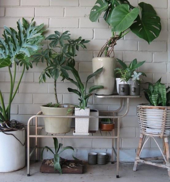 les 113 meilleures images du tableau home range tes plantes sur pinterest plantes d. Black Bedroom Furniture Sets. Home Design Ideas
