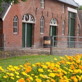 Oranje bloeiers in de tuin: afrikaantje, cosmos, crocosmia, tulp, echinacea, muurbloem, goudsbloem, helenium, daglelie, keizerskroon, meconopsis, oost-indische kers en zinnia.