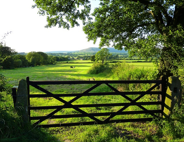 Summer in the Ribble Valley of Lancashire