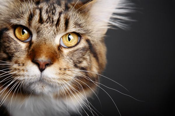 """""""This is such a beautiful shot by Andy."""" Art We Heart: We Talk to Pet Photographer Andy Stolarek"""