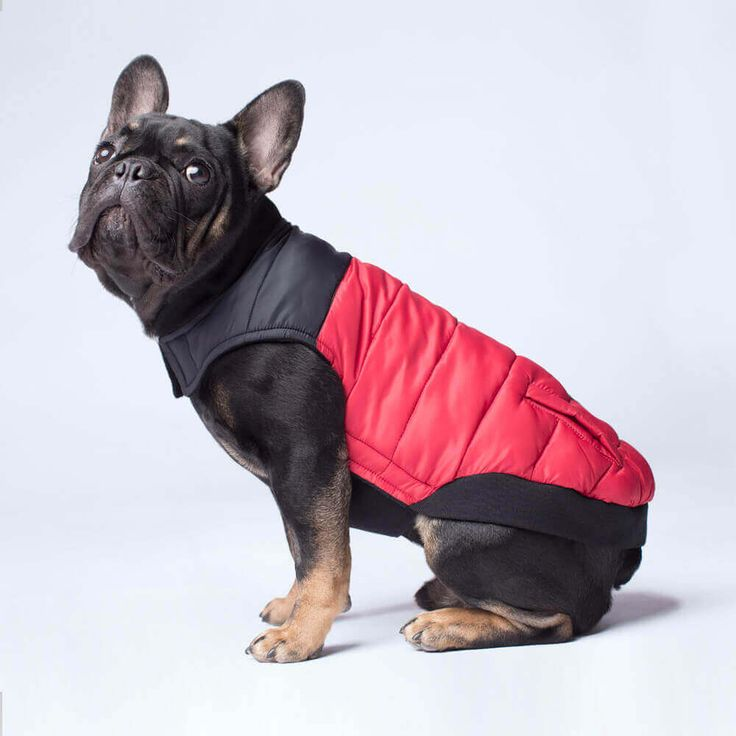 46 best Canada Pooch | 2017 Winter Collection | Dog Coats