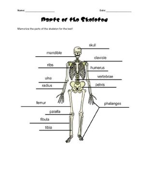 165 best 3 6 free resources images on pinterest classroom ideas no bones about it skeletal systemhuman fandeluxe Images