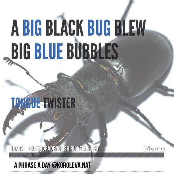 A big black bug blew big blue bubbles = Большой черный жук выдувает большие синие пузыри (скороговорка на проработку звука [b])  А какой звук у вас вызывает трудности?  #aphraseaday #zelenograd #Зеленоград #korolevanat #zelenogradenglish #zenglish