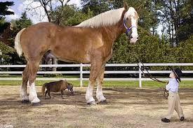 """Résultat de recherche d'images pour """"photos du plus petit cheval  au monde"""""""