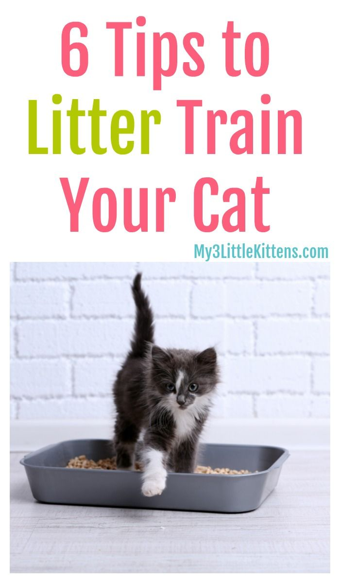 6 Tips To Litter Train Your Cat My 3 Little Kittens In 2020 Litter Training Cat Training Litter Box Litter Training Kittens