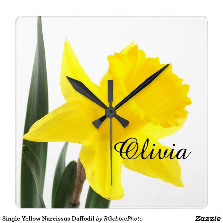 Single Yellow Narcissus Daffodil Square Wall Clock - $38.35 - Single Yellow Narcissus Daffodil Square Wall Clock - by #RGebbiePhoto @ #zazzle - #Flowers #Daffodils #Yellow - A vibrant yellow narcissus daffodil over white. Personalize this line with customizable text! Add Your Name to customize! Symbolizing rebirth and new beginnings, the daffodil is virtually synonymous with spring.