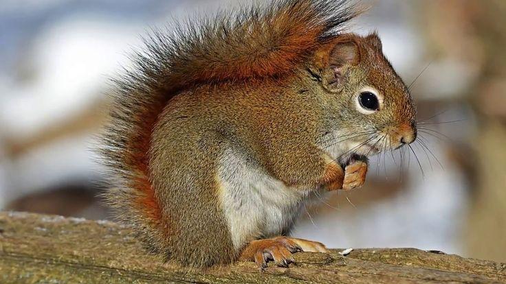 Videod kasside vaatamiseks - linde ja oravaid rõõmu