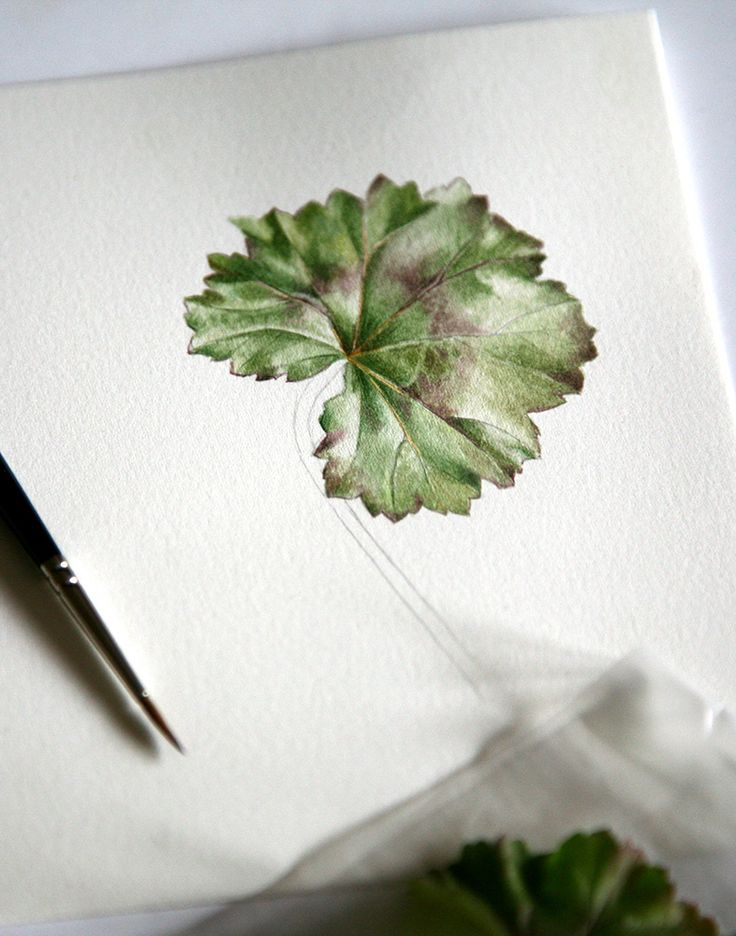 Pelargonium leaf - by Alina Draguceanu. Watercolour on paper.  Frunză de mușcată. Acuarelă