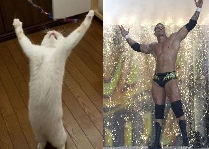Separated at birth? #WWE