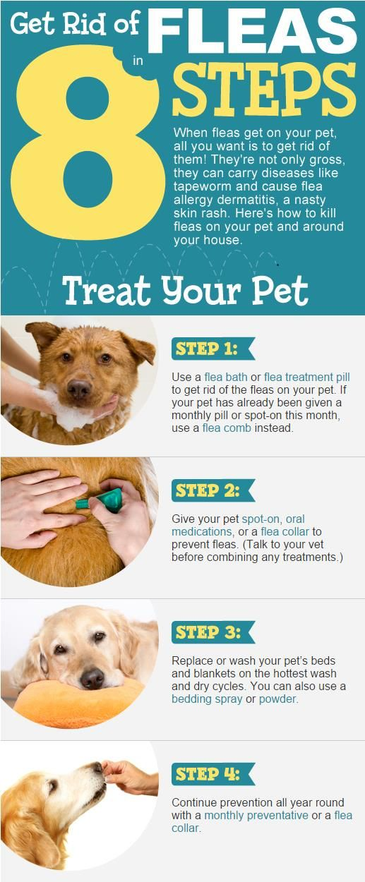 How To Get Rid Of Fleas In The House Video Tutorial