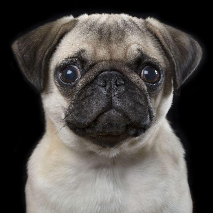 """Rob Bahou présente """"Faces"""" sa série de portraits animalière avec chats, chiens et chevaux ! - « Lissie » – Photo : Rob Bahou"""