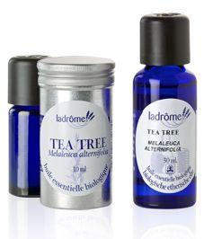 Propiedades y usos del aceite esencial árbol de té. | Productos Ecológicos Sin Intermediarios